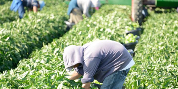60年ぶりの農協監査制度改革!全中の監査権廃止で日本の農業の何が変わるのかを徹底解説!