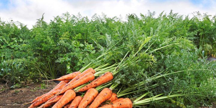 農業法人設立の流れとメリット 白色申告の農家が受けられる税金面の優遇措置とは
