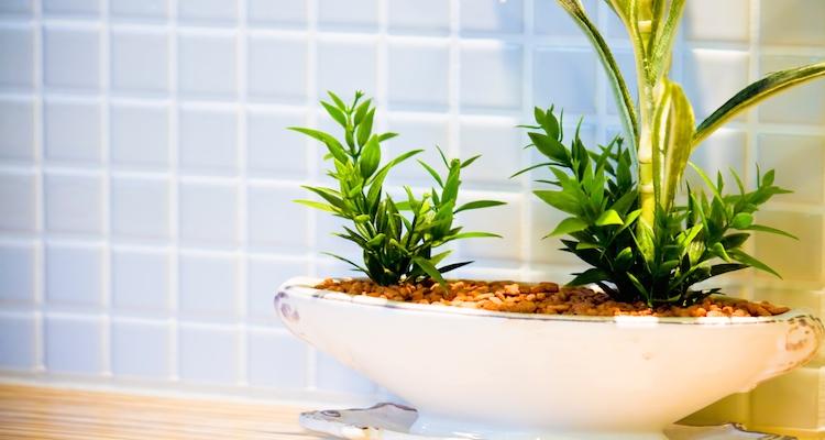 自宅兼事務所においた観葉植物の費用